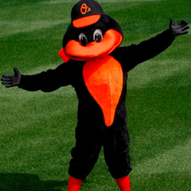 Oriole Bird of the Baltimore Orioles